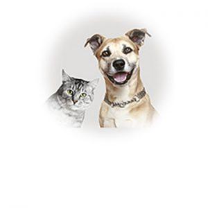 Área Pet